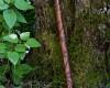 Koncovka růže (C ladění)